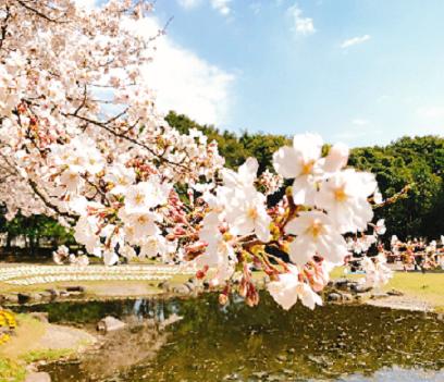 お花見 別府公園・大分市平和市民公園|大分市のリフォーム会社 リフォネ大分のブログ